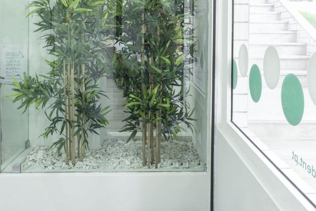 jardim interior clinica dentária